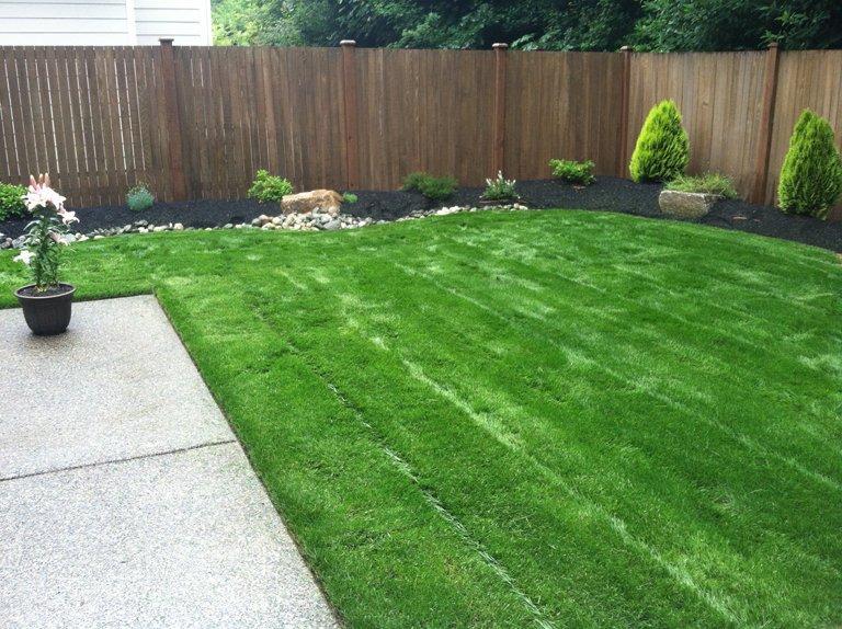 lawn-care-seattle (2)